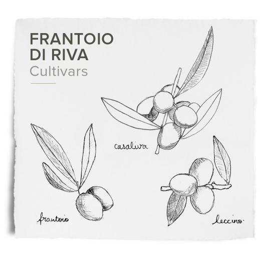 Frantoi - di Riva