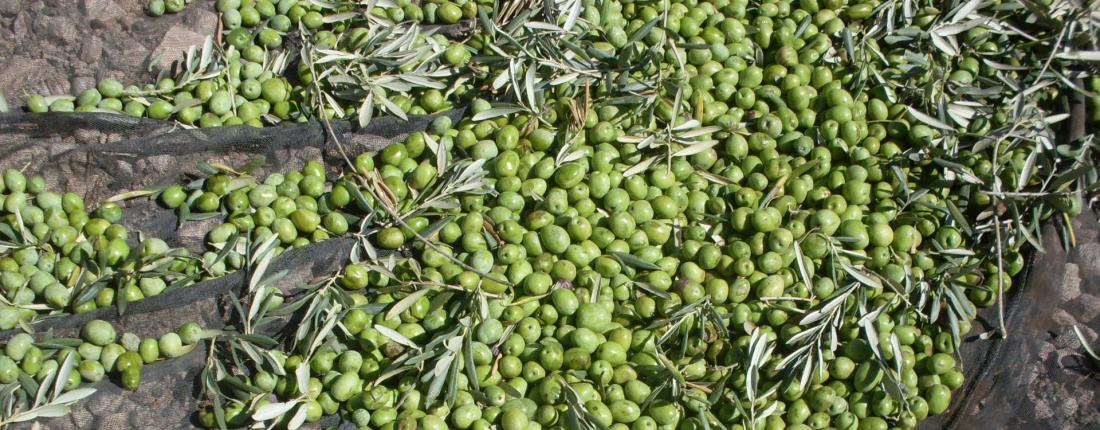 Frantoi - Green Olives