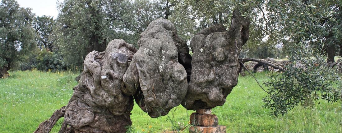 Travel in Puglia frantoi.org
