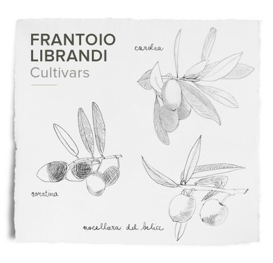 Frantoio Librandi cultivars