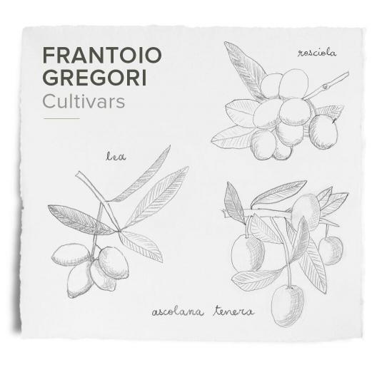 Frantoio Gregori cultivars