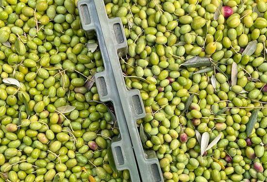 Why fresh olive oil is so much better for you