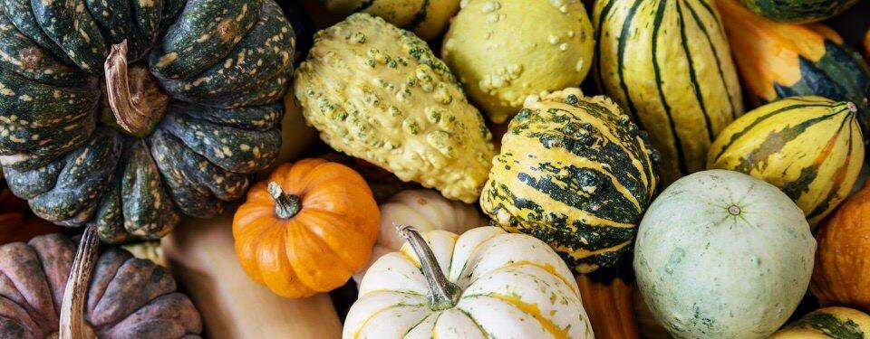 Autumn is the season for pumpkins